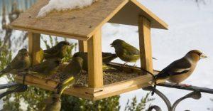 karmnik-ptaki