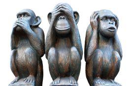 3 małpy