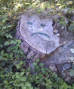 żałoba po drzewie